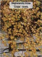 Вьющиеся комнатные растения фото и